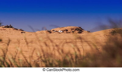 Camera Moves from White Sand Dunes to Lotus - closeup camera...