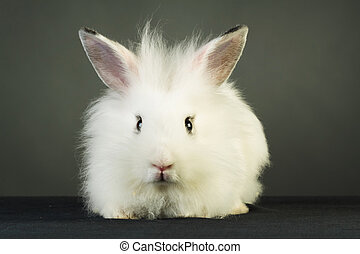 cute white rabbit with big ears  on grey background