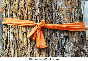 Tree bark and clergy clothes