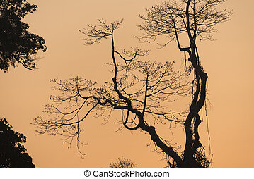 Tree sunset in nature