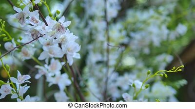 Blossoming flower in spring
