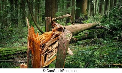Fallen Trees After Stormy Weather - Moving around trees...