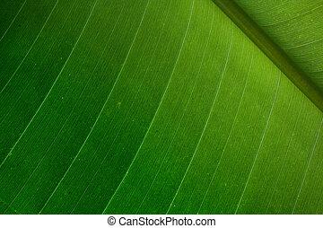 Palm leaf detail - Green palm leaf detail - nice natural...
