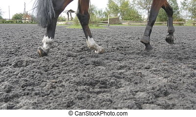 Foot of horse running on the sand. Close up of legs galloping on the wet muddy ground.