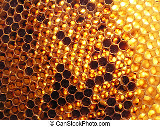 honeycomb full of honey aginst the sun