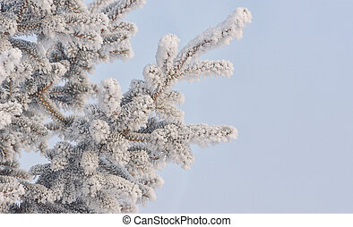 Frozen needles of pine tree and blue sky