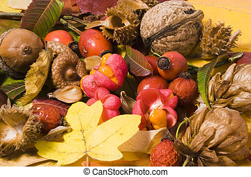 Autumn still life - colorful leafs and other autumn stuff