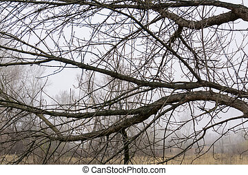 Leafless Tree Branches - Late autumn forest tree branches...