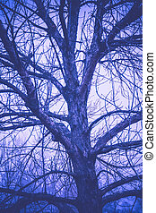 Leafless Tree Branches Retro - Late autumn forest tree...