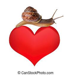 Coração, caracol
