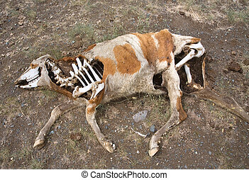 Death In The Desert - Dead animals in the arid steppe