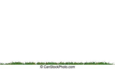 Growing grass - Growing green grass on white, 3d animation
