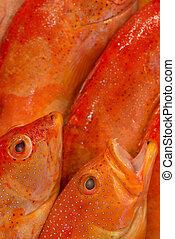 fishmongers display closeup - Macro closeup of fishmongers...