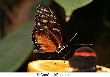 Butterfly - Photo of a beautiful colorful butterfly at work
