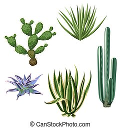 Cactuses and succulents set. Plants of desert.