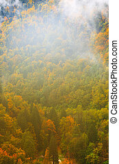 The mountain autumn landscape with colorful forest in...