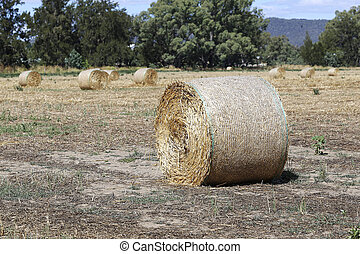 Hayrolls on the field in Mudgee, Australia - View at...