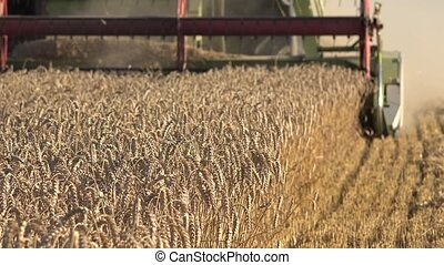 harvesting process grain wheat field summer. Seasonal work.