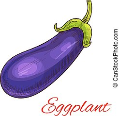 Eggplant vegetable vector isolated sketch - Eggplant...