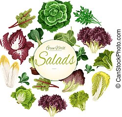 Salads poster of vector green leafy vegetables - Leafy...