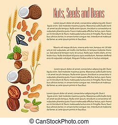Nuts, seeds and beans vector banner - Nuts, grain, plant...
