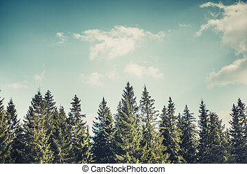 Pine tree forrest - Majestic forest at mountain valley....