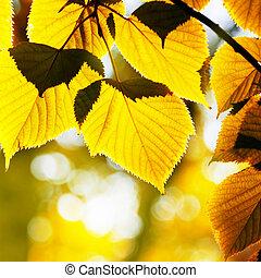 autumn foliage illuminated sun...