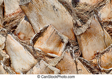 Palm tree trunk background, atural texture. - Palm tree...