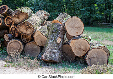 Cut Tree Trunks - Cut tree trunks in pile in a forest.