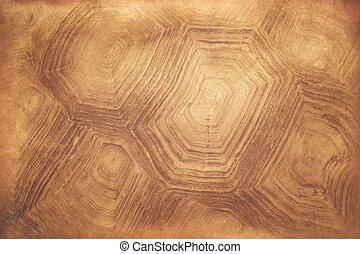 tortoise shell background - pattern on tortoise shell...