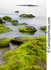 Boulders covered with green seaweed bading in misty sea -...
