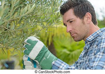 Man pruning hedge