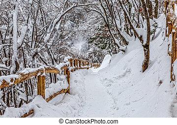 Plitvice lakes snowy winter - Walking trail in snowy winter...