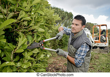 landscaper trimming hedge