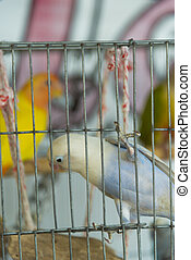 alone bird in cage
