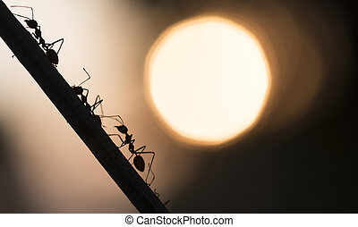 A parade of ants