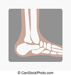 Foot Bones joint - vector human Foot Bones joint side view