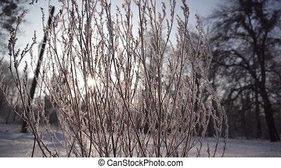 Frozen Bush on Sunset - Sunset slide shot of frozen bush...