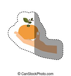 colorful sticker of hand holding tangerine fruit vector...
