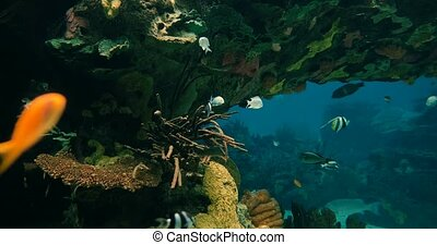 Aquarium Background With Several Fishes And Sharks