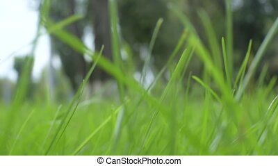 Green grass background. Slider shot, left to right pan.