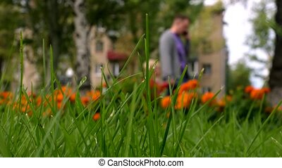 Moving of green grass in park. Walking people background.
