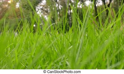 Green grass in park, background. Urban scene. Slider shot
