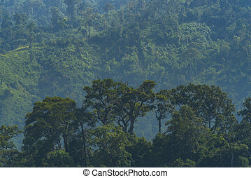 view of natural resource in tropical rain forest, Khao Yai...