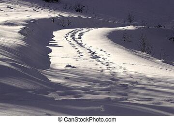 animal tracks on road full of snow