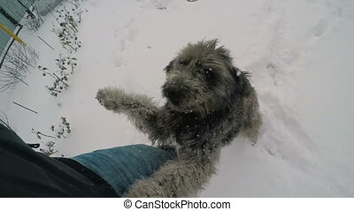 Dog Jumping On the Owner - happy dog rejoing and jumping on...