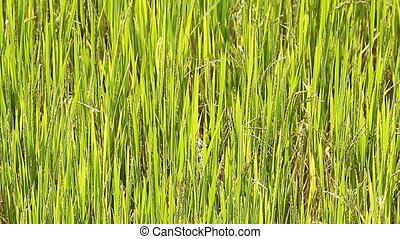Beauty green grass close up at sunny day
