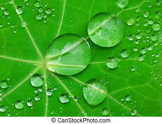 Water drops on green plant.