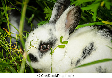 Speckled Rabbit - Speckled rabbit in the grass