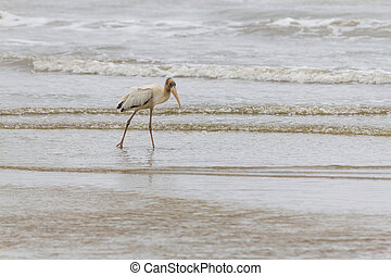 Sea Bird in Cassino beach - Sea Bird in the beach with waves...